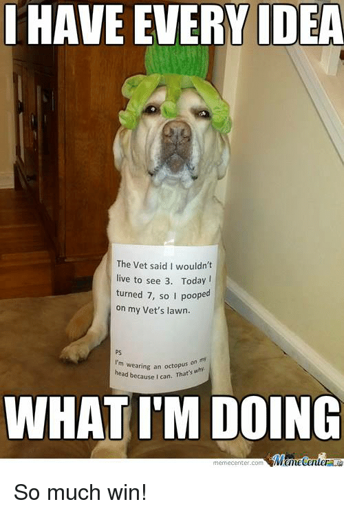 Meme Center: HAVE EVERY IDEA  The vet said I wouldn't  live to see 3. Today  turned 7, so I poope  on my Vet's lawn.  I'm wearing an head because I can. That's  why  WHAT IM DOING  Mane Center  meme Center.com So much win!
