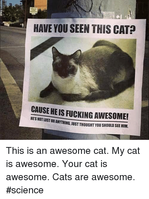 Memes, 🤖, and Cat: HAVE YOU SEEN THIS CAT  CAUSE HE IS FUCKING AWESOME!  HES NOT STORANYTHING.1USTTHOUGHTYOUsHOULDSEEHIM. This is an awesome cat.   My cat is awesome.   Your cat is awesome.   Cats are awesome. #science