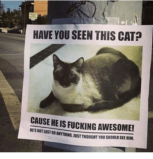 Fucking, Memes, and Awesome: HAVE YOU SEEN THIS CAT  CAUSE HEIS FucKING AWESOME!  HESNOTLOSTORAN  JUST THOUGAT YOU SHOULD SEE HIM