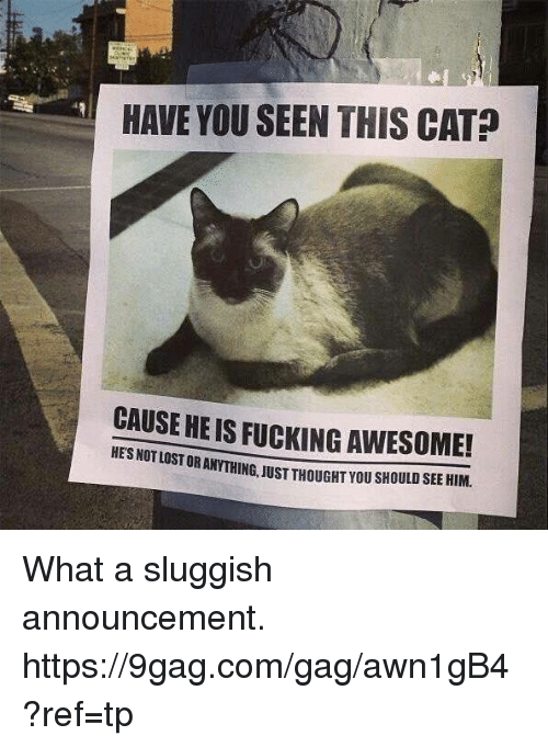 9gag, Dank, and Fucking: HAVE YOU SEEN THIS CAT?  CAUSE HEIS FUCKING AWESOME!  STORANTHING, JUST THOUGHT you sHOULD SEE HIM. What a sluggish announcement. https://9gag.com/gag/awn1gB4?ref=tp