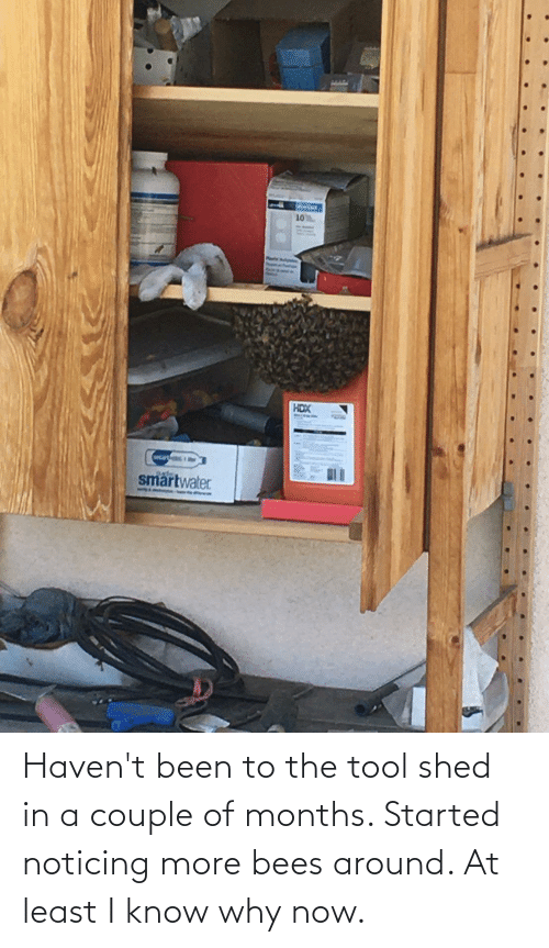 shed: Haven't been to the tool shed in a couple of months. Started noticing more bees around. At least I know why now.