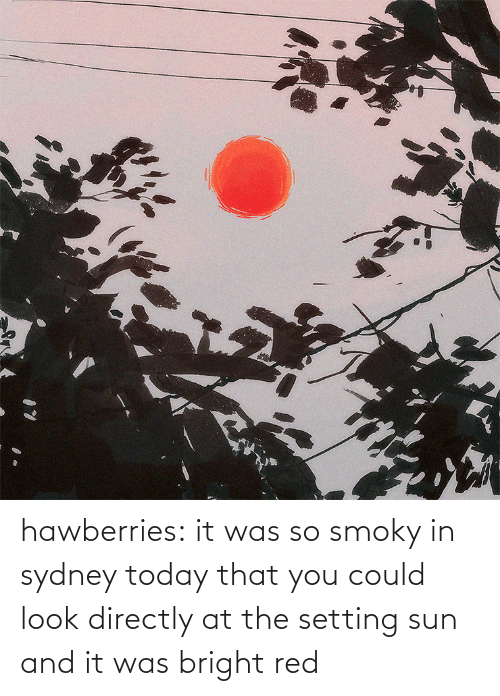 sydney: hawberries:  it was so smoky in sydney today that you could look directly at the setting sun and it was bright red