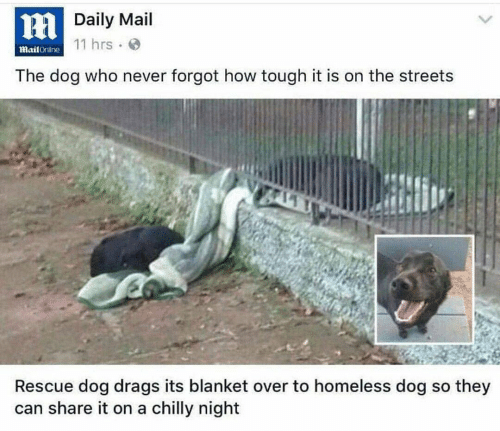 Homeless: HDaily Mail  11 hrs  MailOnline  The dog who never forgot how tough it is on the streets  Rescue dog drags its blanket over to homeless dog so they  can share it on a chilly night