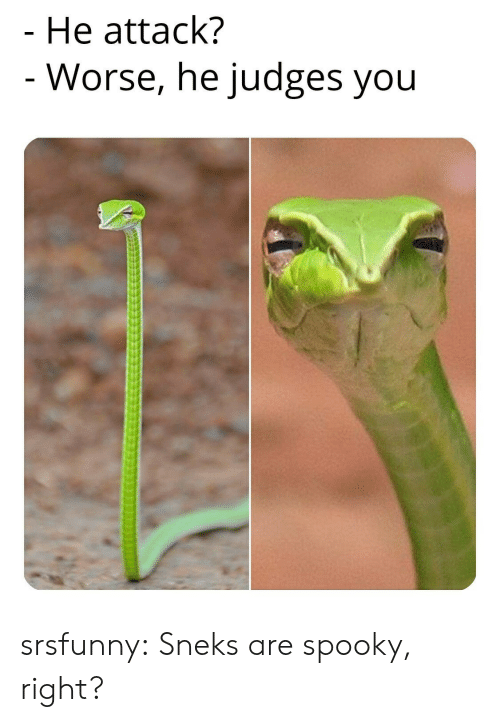 Tumblr, Blog, and Spooky: He attack?  - Worse, he judges you srsfunny:  Sneks are spooky, right?