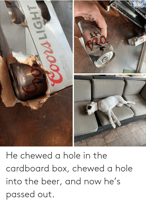 Beer, Box, and Hole: He chewed a hole in the cardboard box, chewed a hole into the beer, and now he's passed out.