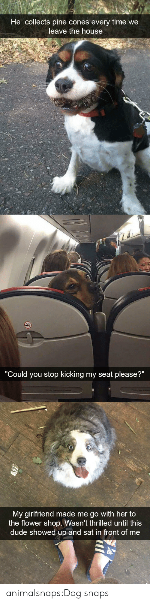 """Dude, Target, and Tumblr: He collects pine cones every time we  leave the house   """"C  ould you stop kicking my seat please?""""   My girlfriend made me go with her to  the flower shop. Wasn't thrilled until this  dude showed up and sat in front of me animalsnaps:Dog snaps"""