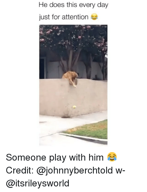 Memes, 🤖, and Him: He does this every day  just for attention Someone play with him 😂 Credit: @johnnyberchtold w- @itsrileysworld