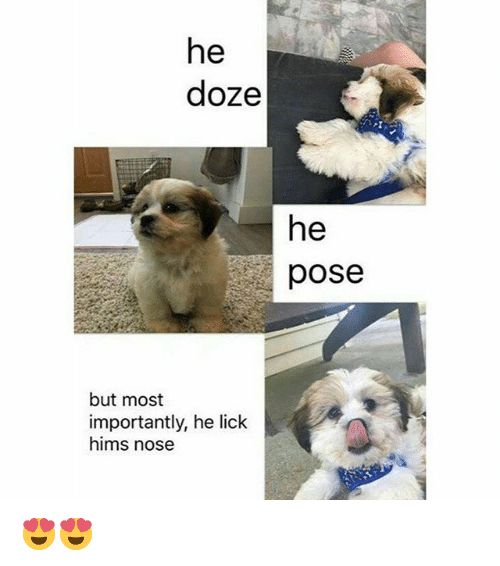 doze: he  doze  he  pose  but most  importantly, he lick  hims nose 😍😍