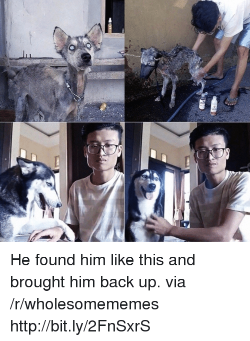 Http, Back, and Him: He found him like this and brought him back up. via /r/wholesomememes http://bit.ly/2FnSxrS