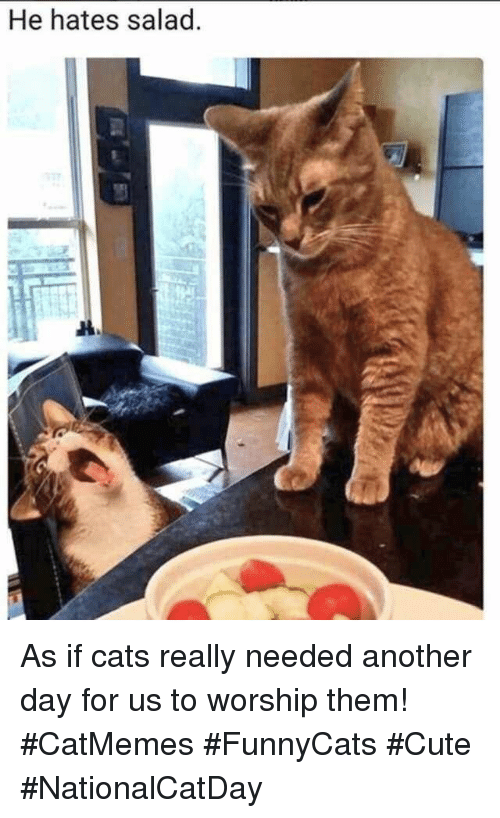 Cats, Cute, and Another: He hates salad As if cats really needed another day for us to worship them! #CatMemes #FunnyCats #Cute #NationalCatDay