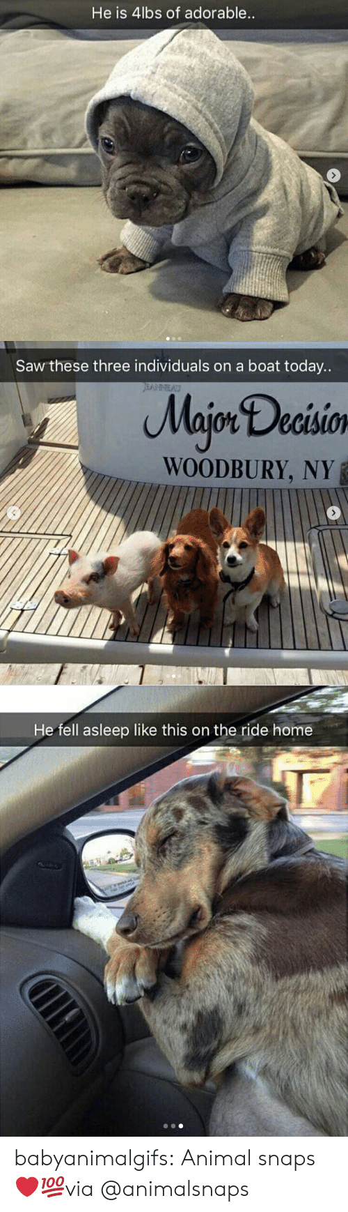 Saw, Tumblr, and Animal: He is 4lbs of adorable   Saw these three individuals on a boat today..  Majon Decisio  WOODBURY, NY   He fell asleep like this on the ride home babyanimalgifs:  Animal snaps ❤💯via @animalsnaps
