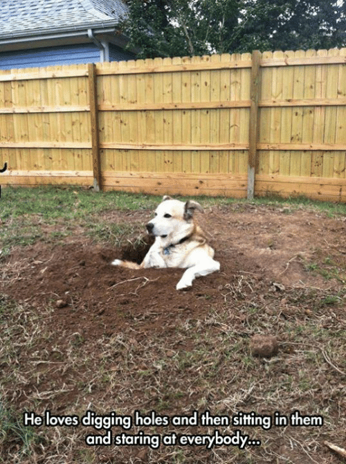 Dank, Holes, and 🤖: He loves digging holes and then sitting in them