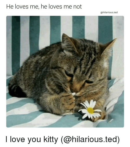 25 best memes about i love you kitty i love you kitty memes