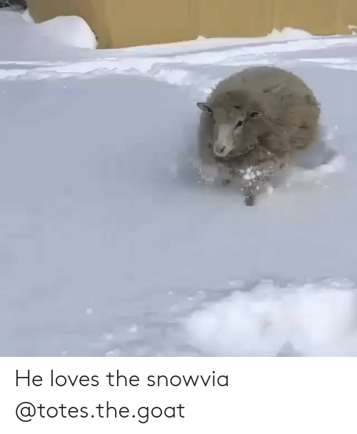 Instagram, Target, and Goat: He loves the snowvia @totes.the.goat
