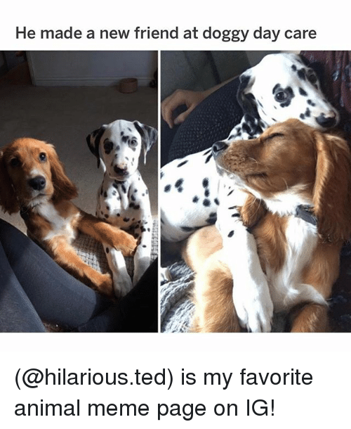 Meme, Memes, and Ted: He made a new friend at doggy day care (@hilarious.ted) is my favorite animal meme page on IG!
