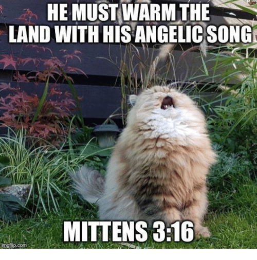 Angelic, Song, and Com: HE MUST WARM THE  LAND WITH HIS ANGELIC SONG  MITTENS 3:16  imgilip.com