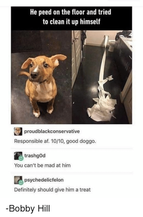 Bobby Hill: He peed on the floor and tried  to clean it up himself  Responsible af. 10/10, good doggo.  trashgod  You can't be mad at him  psychedelic felon  Definitely should give him a treat -Bobby Hill