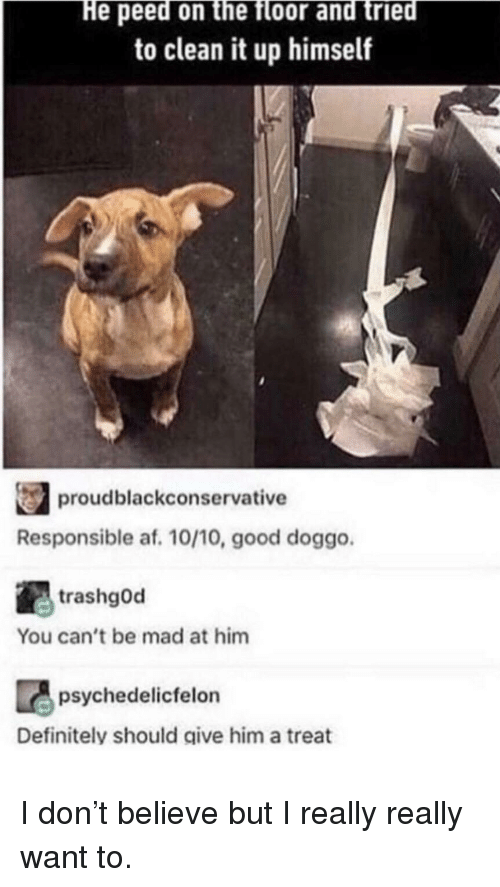 Af, Definitely, and Good: He peed on the floor and tried  to clean it up himself  proudblackconservative  Responsible af. 10/10, good doggo  trashgOd  You can't be mad at him  psychedelicfelon  Definitely should give him a treat I don't believe but I really really want to.