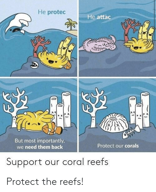 coral: He protec  He attac  产ㅈ  声ㄨ  But most importantly  we need them back  Protect our corals  Support our coral reefs Protect the reefs!