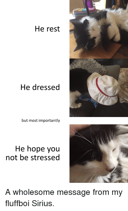 Sirius, Wholesome, and Hope: He rest  He dressed  but most importantly  He hope you  not be stressed A wholesome message from my fluffboi Sirius.