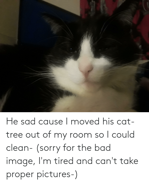 Out Of My Room: He sad cause I moved his cat-tree out of my room so I could clean- (sorry for the bad image, I'm tired and can't take proper pictures-)
