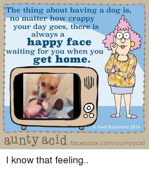 Dogs, Facebook, and Memes: he thing about having a dog is,  no matter how crappy  your day goes, there is  always a  happy face  G  waiting for you when you  get home.  (C) Ged Backland 2016  aunty acid  facebook.com/auntyacid I know that feeling..