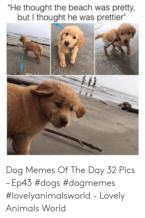 """Animals, Dogs, and Memes: """"He thought the beach was pretty,  but I thought he was prettier Dog Memes Of The Day 32 Pics – Ep43 #dogs #dogmemes #lovelyanimalsworld - Lovely Animals World"""
