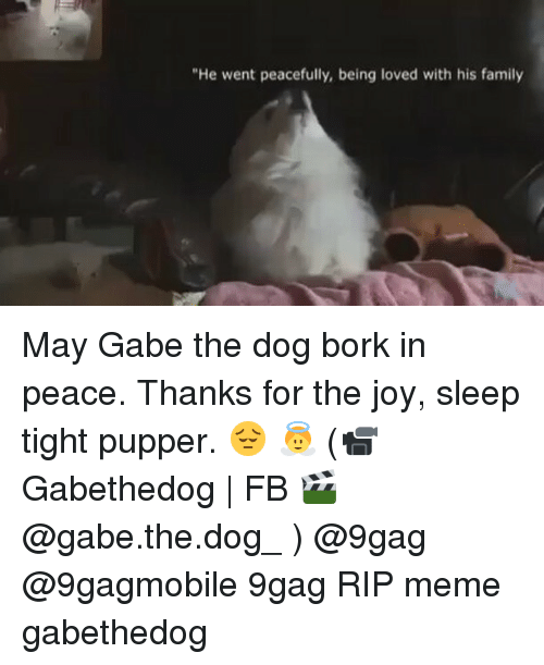 Funny Gabe The Dog Pictures