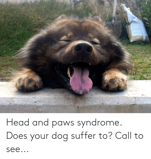 suffer: Head and paws syndrome. Does your dog suffer to? Call to see...