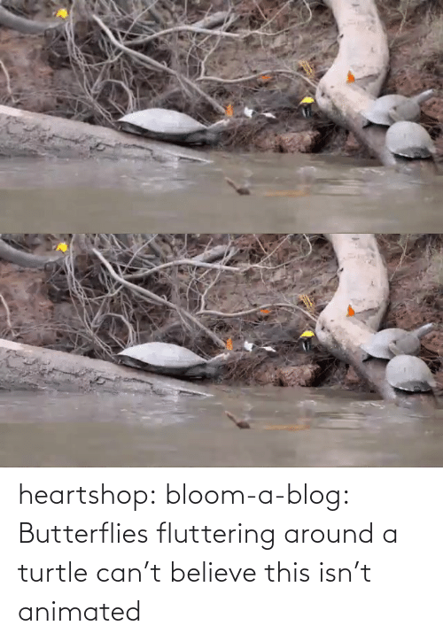 Isn: heartshop: bloom-a-blog: Butterflies fluttering around a turtle can't believe this isn't animated