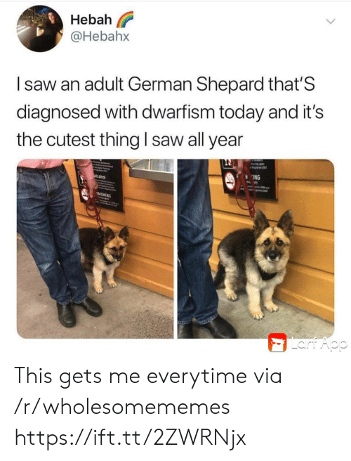 Saw, Smoking, and Alcohol: Hebah  @Hebahx  Isaw an adult German Shepard that'S  diagnosed with dwarfism today and it's  the cutest thing l saw all year  ING  alcohol  SMOKING  Lart Aop This gets me everytime via /r/wholesomememes https://ift.tt/2ZWRNjx