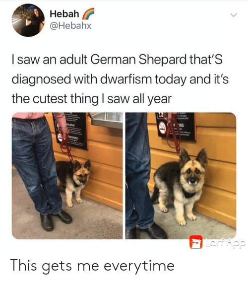 Saw, Smoking, and Alcohol: Hebah  @Hebahx  Isaw an adult German Shepard that'S  diagnosed with dwarfism today and it's  the cutest thing l saw all year  ING  alcohol  SMOKING  Lart Aop This gets me everytime