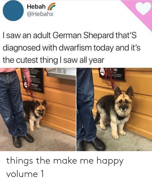 Shepard: Hebah  @Hebahx  Isaw an adult German Shepard that'S  diagnosed with dwarfism today and it's  the cutest thing I saw all year  ING  acohol  SMOKING things the make me happy volume 1