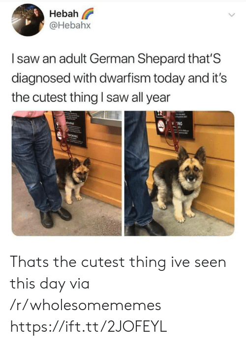 Diagnosed: Hebah  @Hebahx  Isaw an adult German Shepard that'S  diagnosed with dwarfism today and it's  saw all year  the cutest thing  ING  sMORNG Thats the cutest thing ive seen this day via /r/wholesomememes https://ift.tt/2JOFEYL