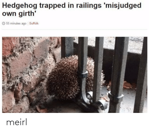 own: Hedgehog trapped in railings 'misjudged  own girth'  O 55 minutes ago Suffolk meirl