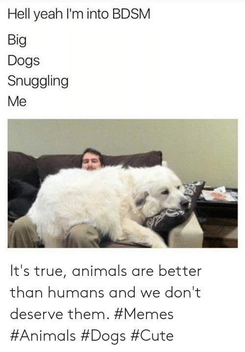 Animals, Cute, and Dogs: Hell yeah I'm into BDSM  Big  Dogs  Snuggling  Me It's true, animals are better than humans and we don't deserve them. #Memes #Animals #Dogs #Cute