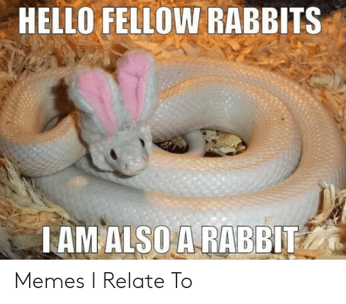 rabbits: HELLO FELLOW RABBITS  TAM ALSO A RABBIT Memes I Relate To