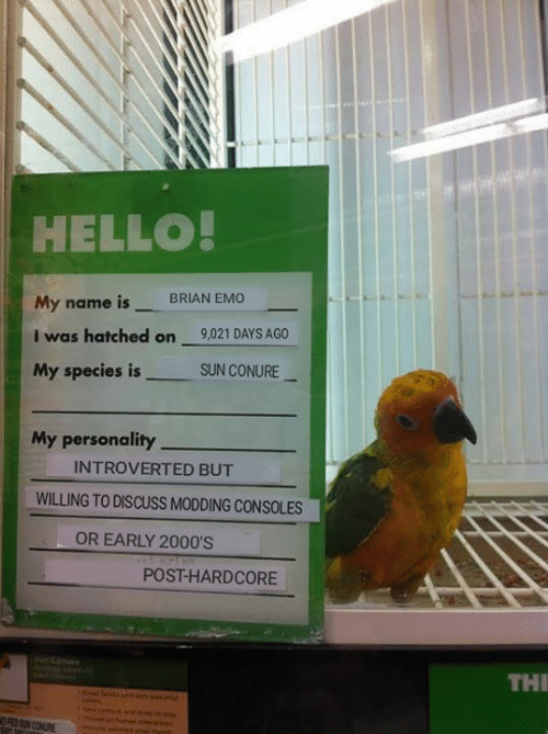 early 2000s: HELLO  My name is BRIAN EMO  I was hatched on 9,021 DAYS AGO  My species isSUN CONURE  My personality  INTROVERTED BUT  WILLING TO DISCUSS MODDING CONSOLES  OR EARLY 2000'S  POST-HARDCORE  Conure  THI