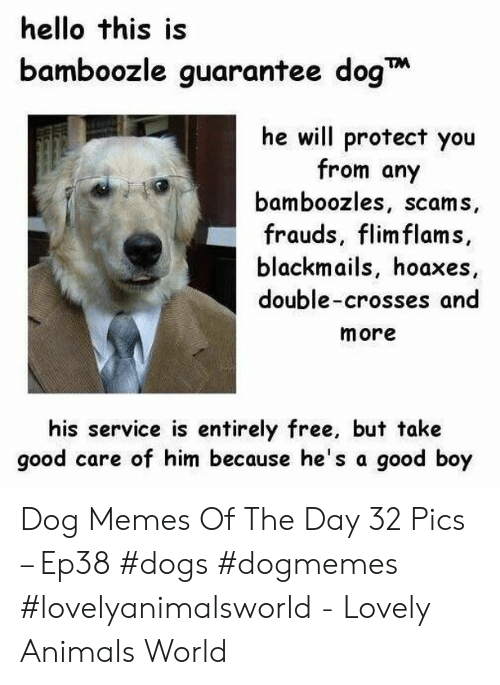 Animals, Dogs, and Hello: hello this is  bamboozle guarantee dog  he will protect you  from any  bamboozles, scams,  frauds, flim flams,  blackmails, hoaxes  double-crosses and  more  his service is entirely free, but take  good care of him because he's a good boy Dog Memes Of The Day 32 Pics – Ep38 #dogs #dogmemes #lovelyanimalsworld - Lovely Animals World