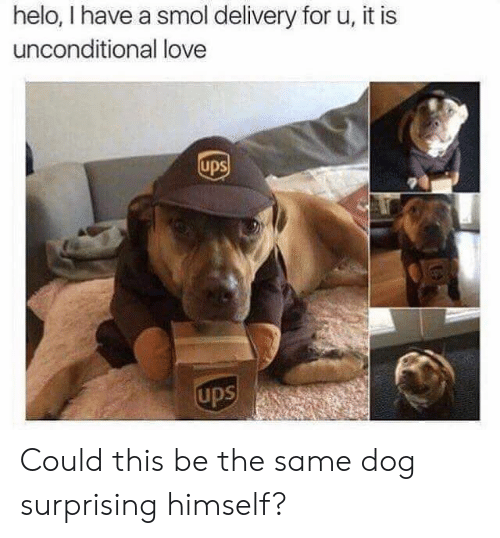 UPS: helo, I have a smol delivery for u, it is  unconditional love  ups  ups Could this be the same dog surprising himself?