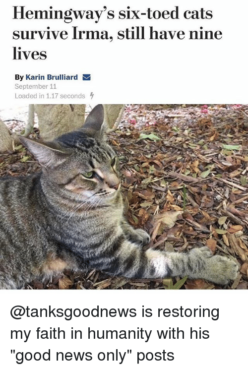 "stillness: Hemingway's six-toed cats  survive Irma, still have nine  lives  By Karin Brulliard  September 11  Loaded in 1.17 seconds @tanksgoodnews is restoring my faith in humanity with his ""good news only"" posts"
