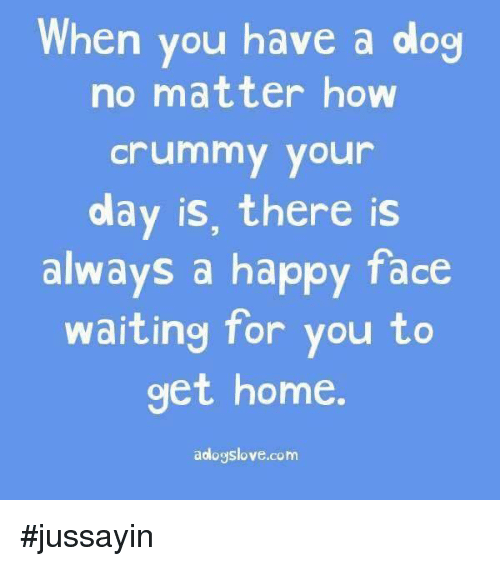 Dank, Happy, and Home: hen you have a dog  no matter how  crummy your  day is, there is  always a happy face  waiting for you to  get home  aologslove.com #jussayin