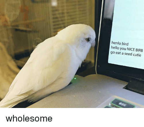 Hello, Wholesome, and Nice: henlo bird  hello you NICE BIRB  go eat a seed cutie wholesome