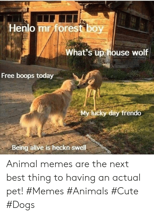 Alive, Animals, and Cute: Henlo mr forest boy  What's up house wolf  Free boops today  My lucky day frendo  doggosdoingthings  Being alive is heckn swell Animal memes are the next best thing to having an actual pet! #Memes #Animals #Cute #Dogs