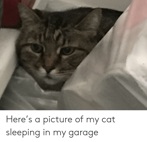 Sleeping, A Picture, and Cat: Here's a picture of my cat sleeping in my garage