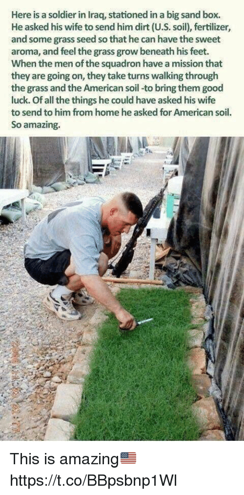Memes, American, and Good: Here is a soldier in Iraq, stationed in a big sand box.  He asked his wife to send him dirt (U.S. soil), fertilizer,  and some grass seed so that he can have the sweet  aroma, and feel the grass grow beneath his feet.  When the men of the squadron have a mission that  they are going on, they take turns walking through  the grass and the American soil-to bring them good  luck. Of all the things he could have asked his wife  to send to him from home he asked for American soil.  So amazing. This is amazing🇺🇸 https://t.co/BBpsbnp1Wl