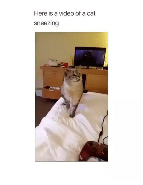 Cat Sneezing: Here is a video of a cat  sneezing