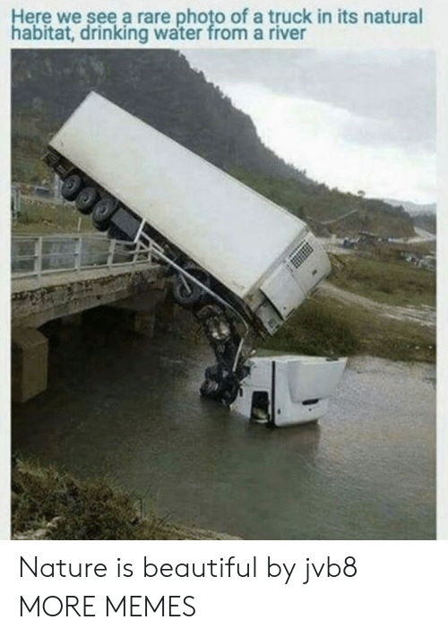 drinking water: Here we see a rare photo of a truck in its natural  habitat, drinking water from a river Nature is beautiful by jvb8 MORE MEMES