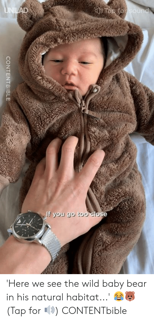 baby bear: 'Here we see the wild baby bear in his natural habitat...' 😂🐻  (Tap for 🔊)  CONTENTbible