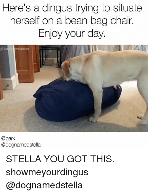 Bean Bagged: Here's a dingus trying to situate  herself on a bean bag chair.  Enjoy your day.  med stella  @bark  @dognamedstella STELLA YOU GOT THIS. showmeyourdingus @dognamedstella